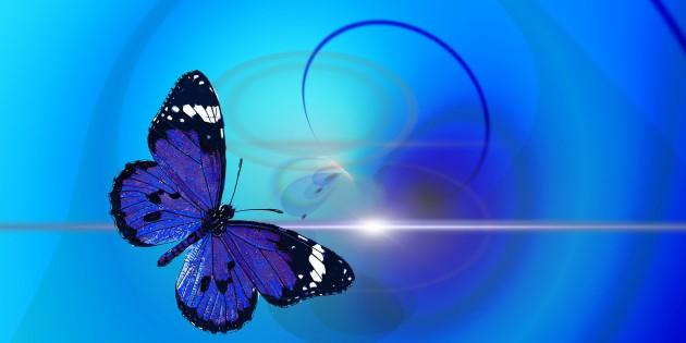 butterfly-436705_1920